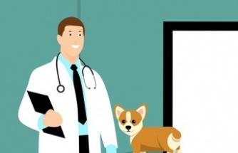 2020 ocak temmuz dönemi veteriner hekim maaşları